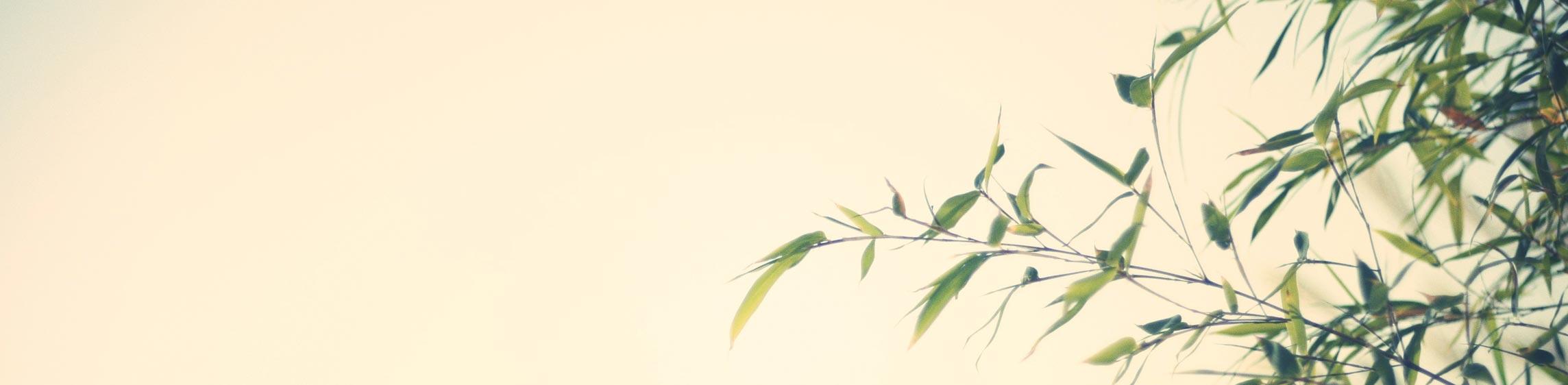 Spezial-Importe für Baumschulbedarf und Obstbau